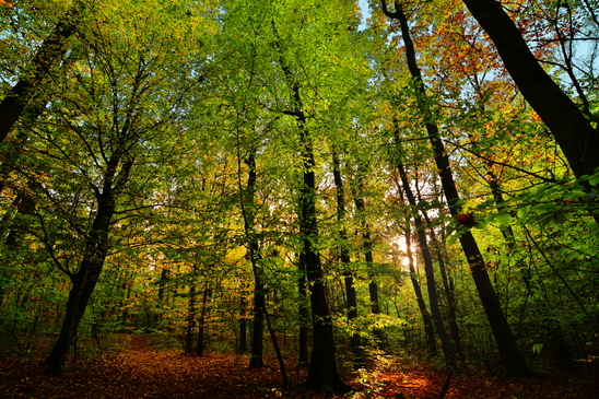 Warming musk and green woody notes fill the calm forest air